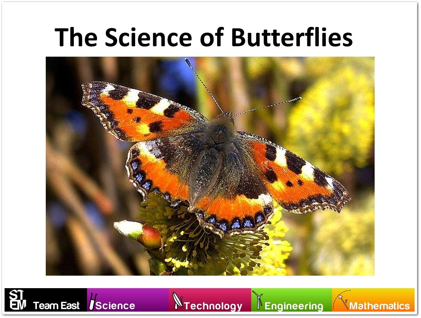 butterfly-science-updated-2016_2