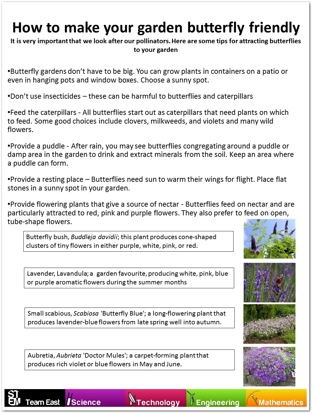 how-to-make-your-garden-butterfly-friendly_2